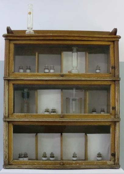 Bear specimens in cabinet